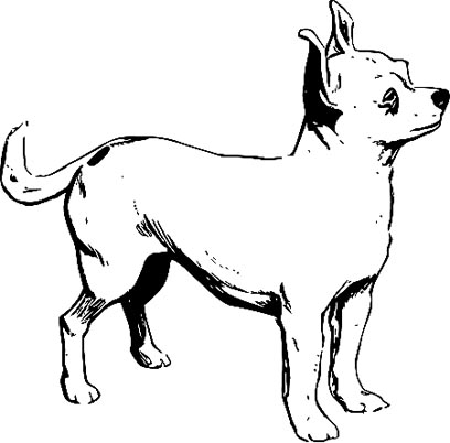 Chihuahua Malvorlage