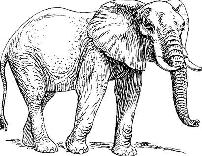 Elefant Malvorlage- Vorlage Elefant zum Ausdrucken