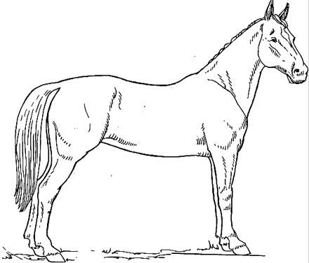 Pferd stehend malvorlage schönes ausmalbild