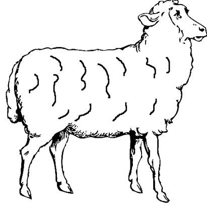 Schaf Malvorlage