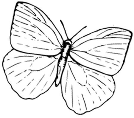 Schmetterling einfach zum Ausmalen