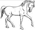 Dressur Pferd Malvorlage