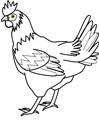 Huhn Malvorlage