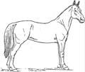Stehendes Pferd Malvorlage