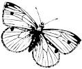 Bild zum Ausmalen - Schmetterling