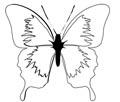 Vorlage sch�ner Schmetterling