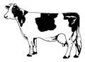 Bauernhof Tiere Malvorlagen